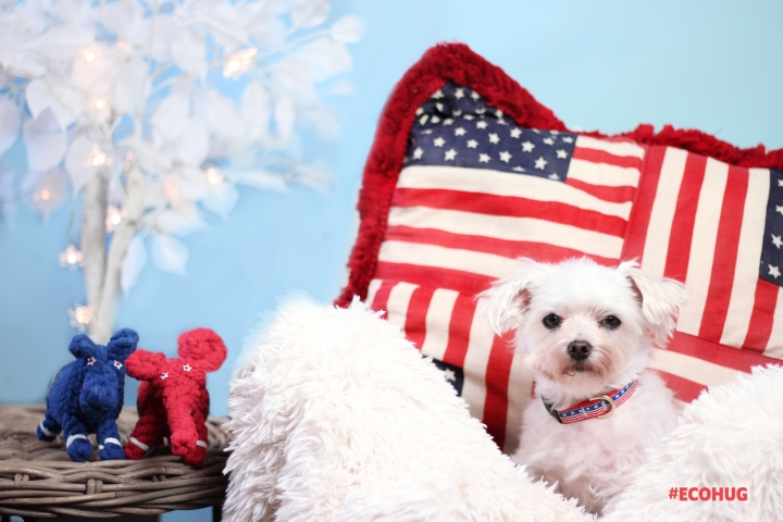 Durable Dog Toys and Patriotic Dog Collars