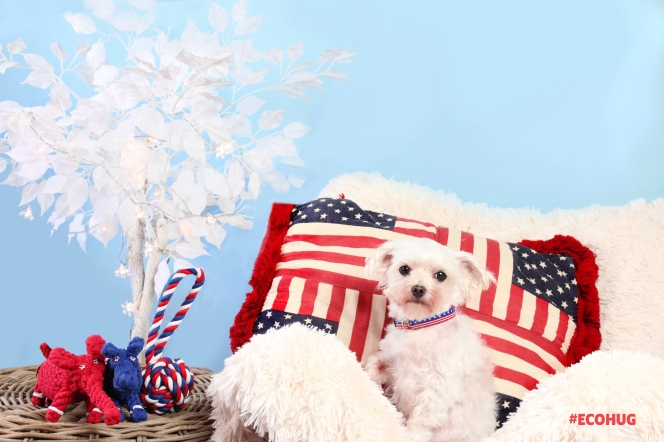 Dog Rope Toys and Best Dog Collars