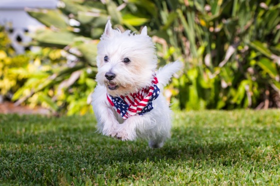 Fourth of July Tips for Dog Safety