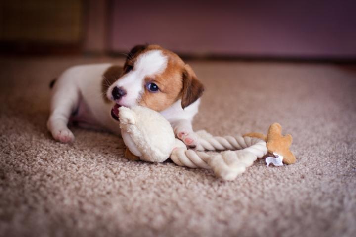 Choosing Safe Dog Toys