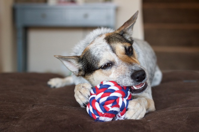 Jax and Bones Dog Toys